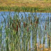 У озера бродит сентябрь :: Татьяна Ломтева