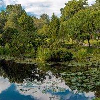 Японский сад. :: Николай