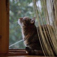 Сидела кошка на окошке... :: Лилия П.