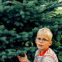 Мелкий у елки :: jenia77 Миронюк Женя