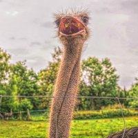 На страусиной ферме! :: Натали Пам