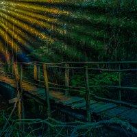 В таинственном лесу мосток ведущий в сказку......... :: Rost Pri (PROBOFF-RO) Прилуцкий Ростислав
