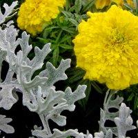 Цветы осени :: OLLES