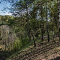 Весной в лесу. :: Владимир Безбородов