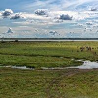 Излучина реки :: Дмитрий Конев