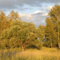 Осень листву золотила ... :: JT --------      SHULGA  Alexei