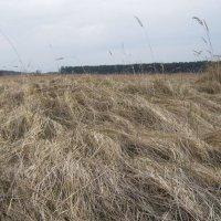 берег реки Лиелупе в апреле :: Анна Воробьева