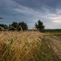 Урожай 17-го... :: Влад Никишин