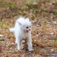 Бездомный котёнок :: Сергей Бойко