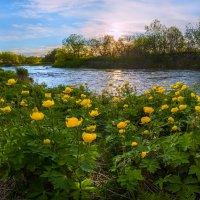 Золотые цветы :: Фёдор. Лашков