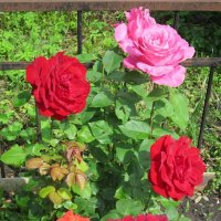Пять прекрасных роз :: Дмитрий Никитин