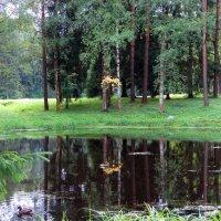 Осень в зеркале. :: Алексей Цветков