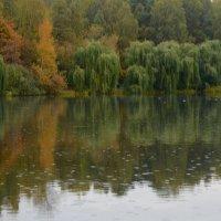 В осеннем парке, под дождем... :: Ольга Русанова (olg-rusanowa2010)