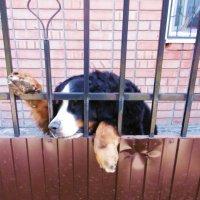 Охранник немного устал :: татьяна