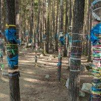 в лесу, п.Аршан, Тункинский р-н,Бурятия :: Борис Коктышев
