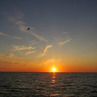 Буревестник на закате :: valeriy khlopunov