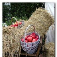 Инсталяция с яблоками. :: Чария Зоя