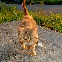 Солнечный кот. :: Александр Зуев