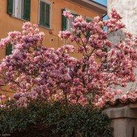 Пиза. По Via Roma к реке Арно. Весна. :: Надежда Лаптева