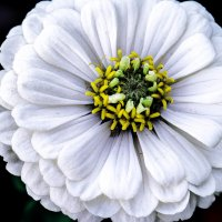 Просто цветок :: Tatiana Poliakova