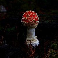 ,,,,,,и пошёл я в лес дремучЪдремуческий,,,и нашел я там грибЪ,,заветный аленький,,,, :: Дон Пионеро Карбонариевский