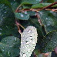 Эстетика дождя :: Forrest