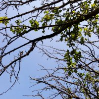 Ветви деревьев :: Татьяна Королёва