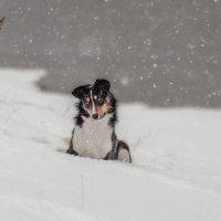 По первому снегу. :: Марина Фомина.