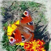 Краски сентября. :: Чария Зоя