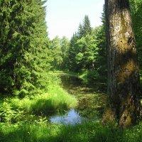 Летний день в лесу :: Дмитрий Солоненко