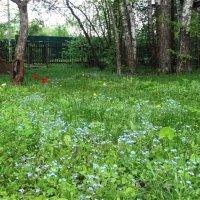 Трава у дома моего :: Светлана Лысенко