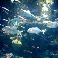 У аквариума :: Serg