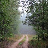 Дождевые осенние росы... :: Лесо-Вед (Баранов)