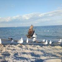 Голубь и чайки :: Galina