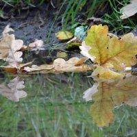 Просто лужа,просто осень.... :: Алексей Цветков
