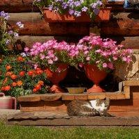 Красивая жизнь кота Ярофея :: Евгений Карский