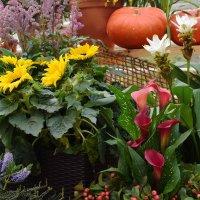 Цветы украшают выставку. :: Татьяна Помогалова