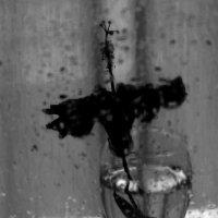 ..а я один в бокале. И темно. :: Ирина Сивовол