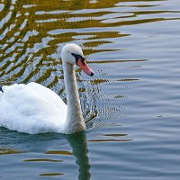 Заплыв по спокойной воде :: Анатолий Иргл