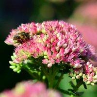 Пчелы за работой :: Сергей Землянский