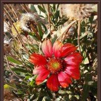 Последние цветы Бабьего лета :: Владимир Бровко