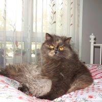 Желтоглазая красотка, Китти! :: Galina Dzubina