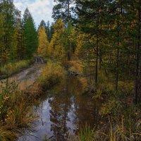 Осенняя дорога :: vladimir Bormotov