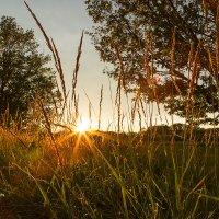 Закат в траве :: Александр Синдерёв