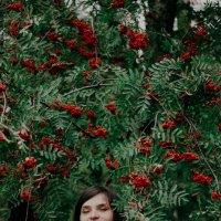 Красочная осенье :: Вероника Етоева