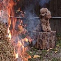 Маленький пожарник) :: Олег Каплун