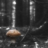 Рыжий в сумеречном лесу ... :: Va-Dim ...
