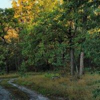 Осенних чувств звенящая прохлада... :: Лесо-Вед (Баранов)