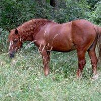 конь :: Валерия Яскович
