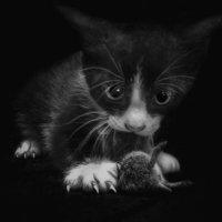 Кошки - мышки .... :: Va-Dim ...